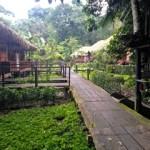 Sacha Lodge – Amazon Rainforest of Ecuador
